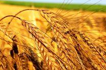 بدهی صندوق بیمه محصولات کشاورزی به بانک کشاورزی تعیین تکلیف شد