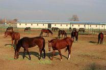 واحد تکثیر و پرورش اسب اصیل کُرد در سنندج افتتاح شد
