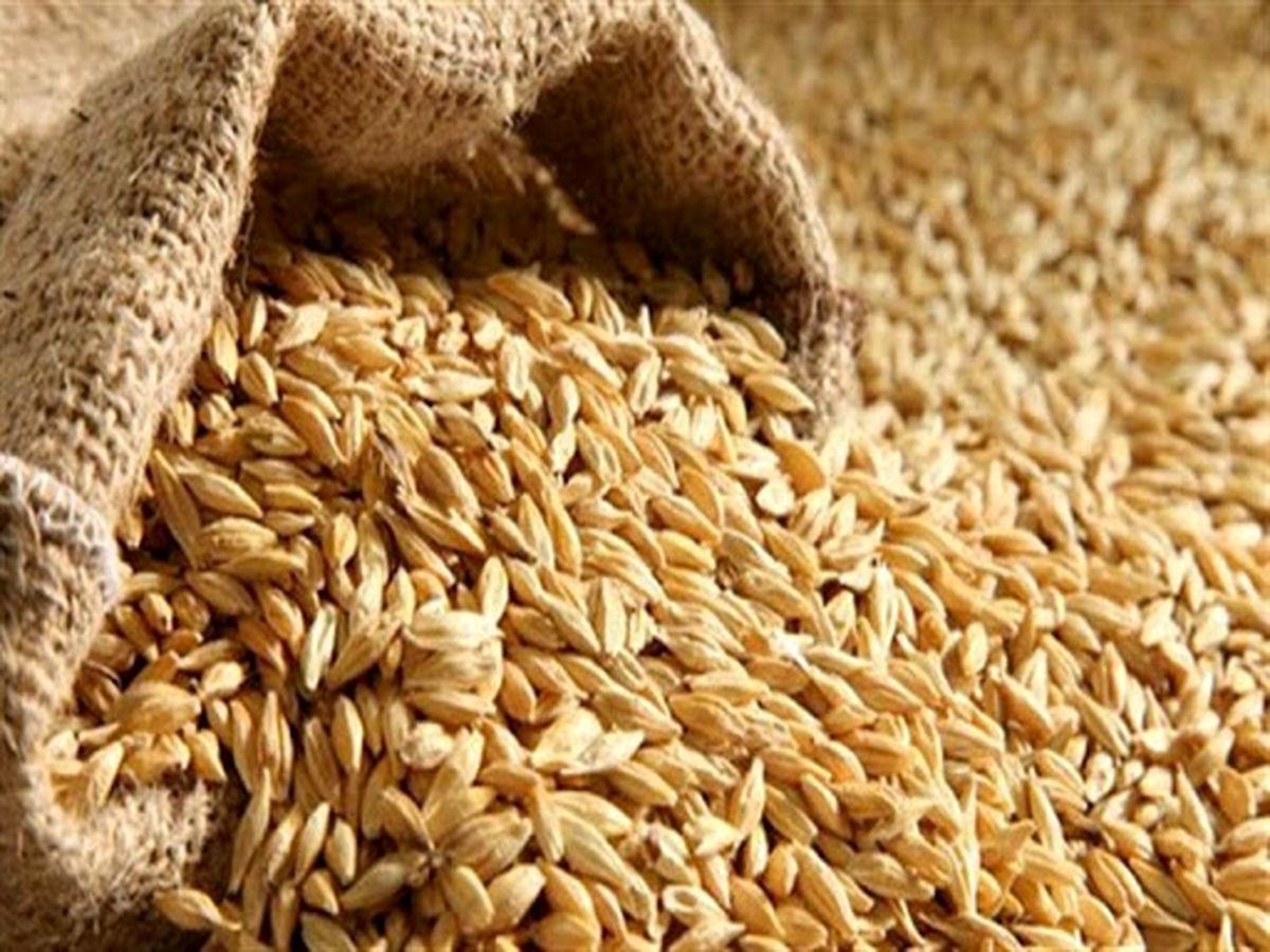 قاچاق گندم به عراق شایعه است/ دولت باید قیمت خرید تضمینی گندم را افزایش دهد