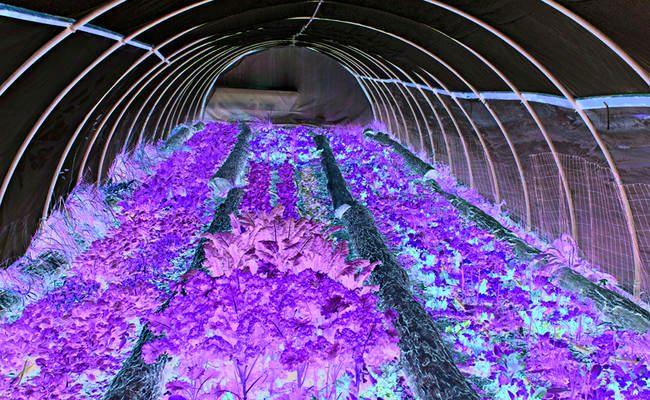 ساخت مجتمع گلخانه ای ۳۰هکتاری عمان در طول یک سال اخیر /۸۵ هکتار گلخانه در رزن و درگزین در حال ساخت است