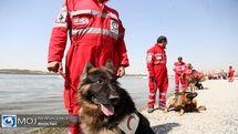 حضور سگ های هلال احمر برای یافتن زهرا حسینی