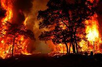 دالاهو و گهواره کانون اصلی خسارت ناشی از آتش سوزی درختان بودند