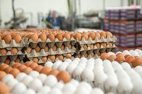 قیمت تخم مرغ نسبت به دوره مشابه سال قبل ۳۵.۸ درصد گران شد
