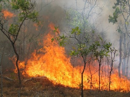 آتشسوزی در مراتع عبدالمناف آمل/ آتش در حال مهار است