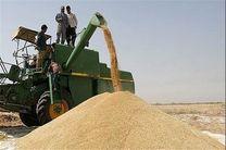 معامله ۲ هزار و ۳۰۰ تن گندم با قیمت تضمینی
