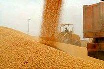 87 هزار تن گندم  از کشاورزان کردستانی خریداری شد