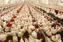 تولیدکنندگان مرغ را با سود حداقلی وارد بازار کنند