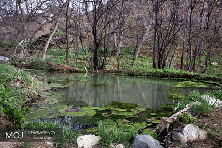 طبیعت روستای قلعه لان در استان کرمانشاه
