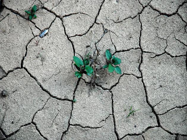 ترسیب کربن 13 ساله شد/ سرانه بیابان در کشور دو برابر میانگین جهانی