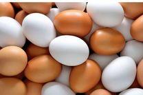 تخم مرغ سردمدار گرانی شد