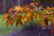 بارش باران در سواحل دریای خزر
