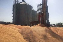 بخش صنعت و خبازی کرمانشاه سالانه 220 هزار تن گندم نیاز دارند
