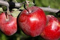 میزان تولید سیب به ۴ میلیون و ۱۲۰ هزار تن رسیده است