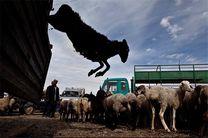 کشف 33 رأس گوسفند و 9 رأس دام قاچاق در میناب/توقیف 6 دستگاه خودرو