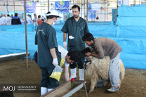 شهروندان از مراکز تعیین شده اقدام به خرید و ذبح دام کنند
