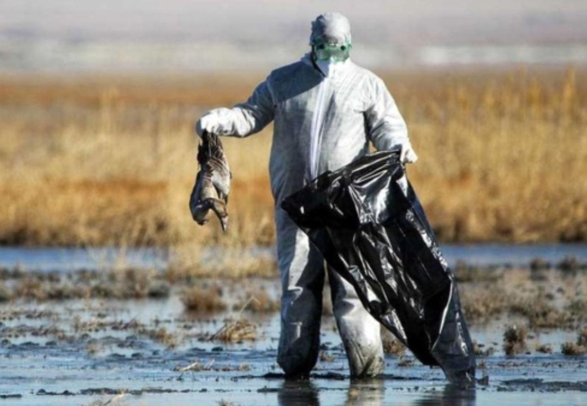 مرگ در میانکاله راز یک فاجعه زیست محیطی را برملا می کند