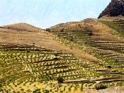توسعه باغات اراضی شیب دار دیم موجب کاهش کوله بری و اشتغالزایی در مناطق مرزی می شود