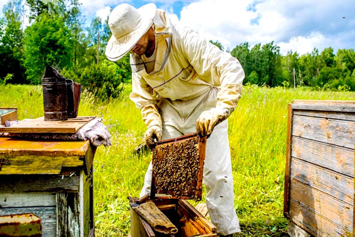 کاهش ۲۶ درصدی تولید عسل در شهرستان تایباد