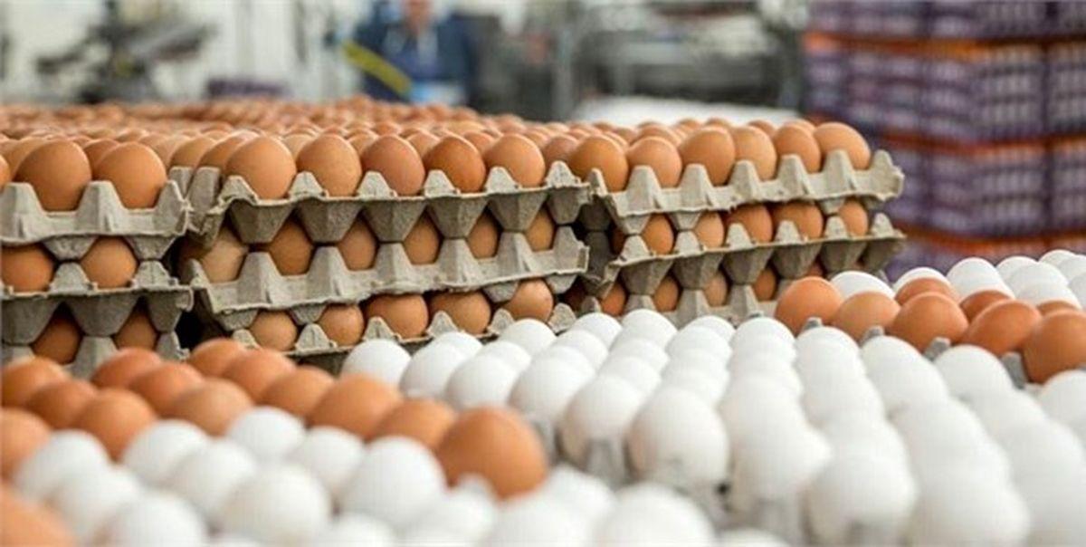 افزایش قیمت تخم مرغ از امروز به صورت رسمی