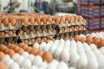 چرا تخم مرغ در بازار گران شد؟