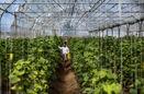 توسعه گلخانهها باعث ارتقاء بهرهوری آب، ایجاد اشتغال و تولید پایدار میشود