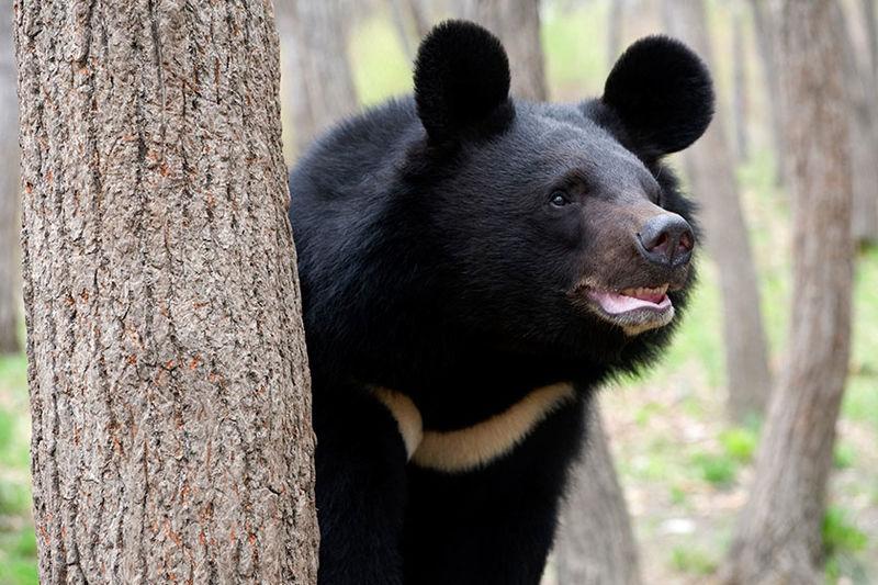 شناسایی ۳۰ قلاده خرس سیاه در کوههای بشاگرد/ تعداد محیطبانان هرمزگان کافی نیست
