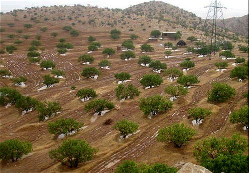 ۹۰۰ هزار هکتار از اراضی استان اردبیل در سامانه حدنگار جانمایی شده است