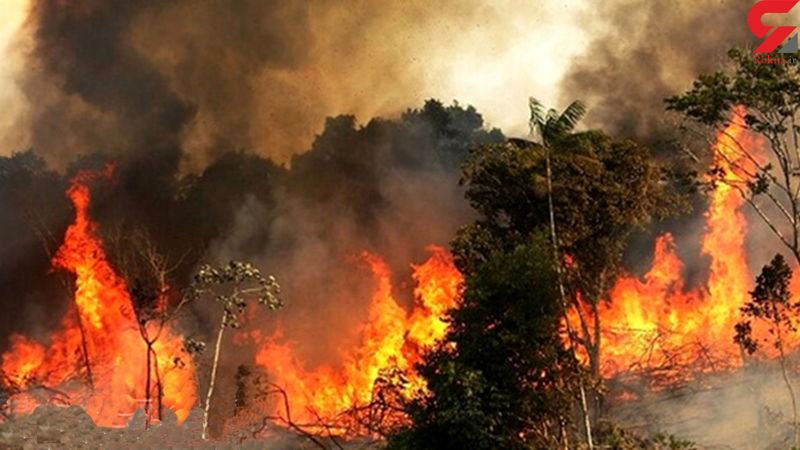 آتش سوزی در جنگلهای منطقه حفاظت شده شهرستان دنا