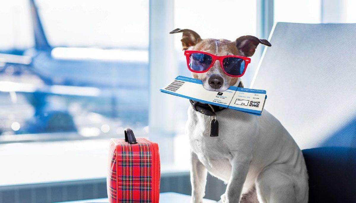 قوانین مهم حمل حیوانات خانگی در سفرهای هوایی