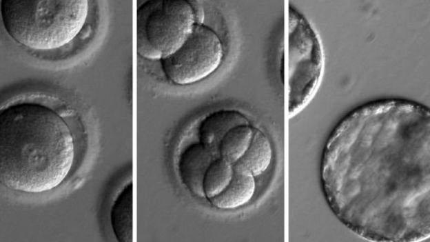ترمیم دیانای، گامی برای ریشهکنی بیماریهای ارثی