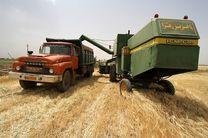 خریداری ۵۰ درصد گندم ۵ استان