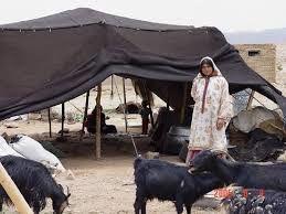 نقش مهم عشایر در تولید 25 درصد گوشت قرمز یزد