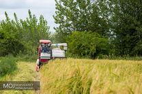 ۸۰ درصد محصول برنج مازندران برداشت شده است