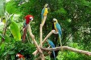 آغاز بکار مجدد مجموعه باغ پرندگان در اصفهان