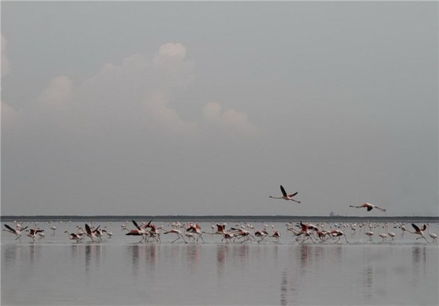 پرورش ماهیان بومی در تالابهای گلستان توسعه مییابد