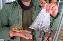 فروش مار و لاکپشت نوروزی در چهارمحال و بختیاری