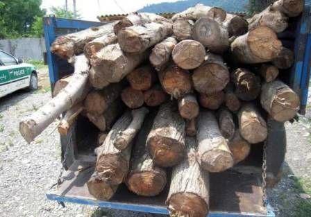 کشف 3 تن چوب بلوط قاچاق در نجف آباد