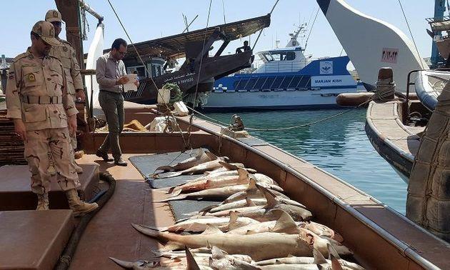 توقیف لنج حامل ماهیهای قاچاق در قشم