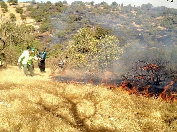 آتشسوزی وسیع اراضی کشاورزی و جنگلی گالیکش مهار شد