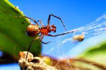 عنکبوت ها شخصیت های متفاوتی از خود بروز می دهند