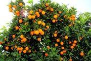 صادرات مرکبات از مازندران ممنوعیت ندارد