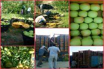 خریداری 800 تن میوه شب عید کهگیلویه و بویراحمد از کشاورزان