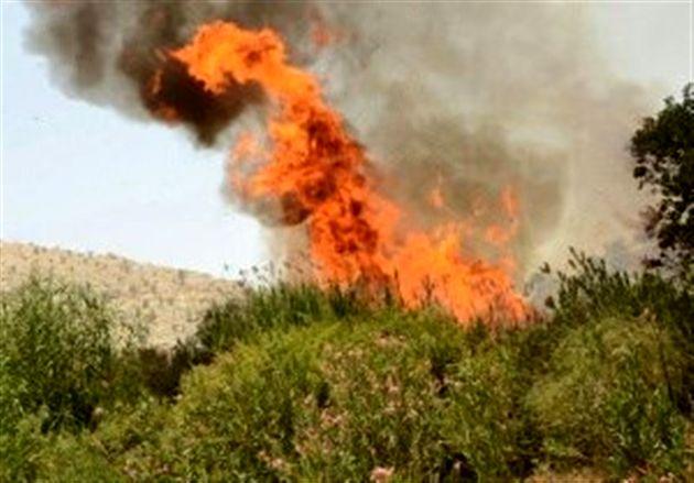 آتش در جنگلهای شمیرانات/۱۰۰ هکتار سوخت