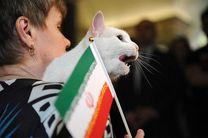 ایران در بازی مراکش پیروز است