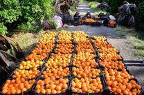 پیش بینی افزایش صادرات محصولات کشاورزی مازندران