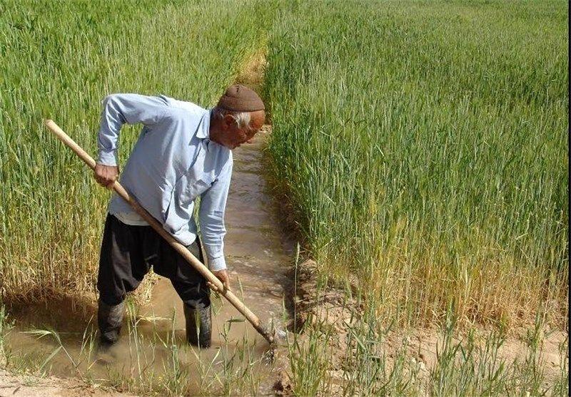شیروان قطب تولید جو در خراسان شمالی