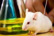 تولید سالانه 50 هزار سر حیوانات آزمایشگاهی در موسسه رازی