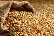 2 درصد از مطالبات گندم کاران کردستانی پرداخت شد