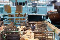 رونق صادرات دام زنده از بندرلنگه به قطر