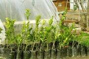 طرح کاشت ۴۰ هزار اصله نهال در اردبیل